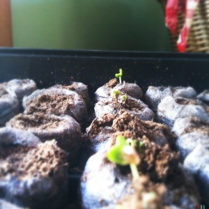 Day 3 Sprouts