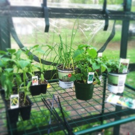 Some of our nice herbs and starter Veggies
